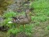 2013-0627-duck-bath-20