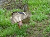 2013-0627-duck-bath-21
