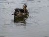 2013-0627-duck-bath-43