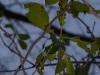 2012-0313-mtn-laurel-1_0