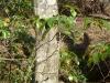 2012-0315-mtn-laurel-gibbs-2