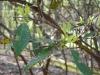 2012-0326-mtn-laurel-2