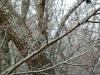 2014-0101-downy-woodpecker-a