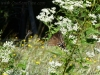 2011-0912-butterfly-on-hole-8_wm