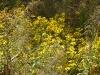 2011-1107-wildflowers
