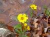 2011-1121-flowers-on-3