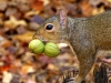 2012-1026-squirrel-nuts-pm.jpg