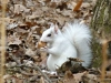 2015-1216-white-squirrel-nut.jpg