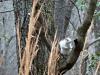2017-0212-white-squirrel.jpg