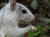 2017-1013-white-squirrel-closeup.jpg