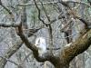 2017-1221-white-squirrel.jpg