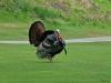 2013-0510-turkey-1