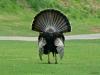 2013-0510-turkey-4