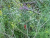 2012 0910 cardinal flower ironweed goldenrod boneset quarry.JPG