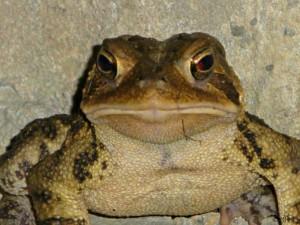 June 7, 2013 - frog in Bent Tree
