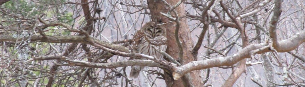 cropped-2015-0220-barred-owl.jpg