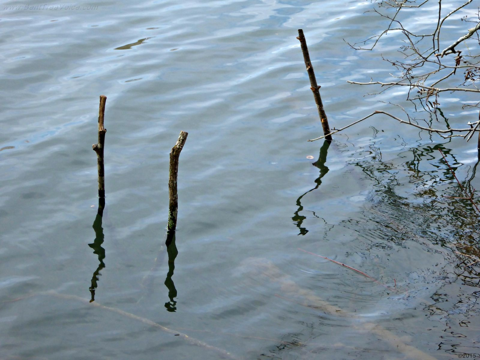 February 14, 2015 - closeup of sticks used with the trap