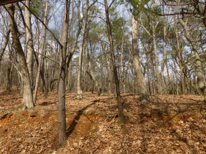 Nice wooded, buildable lot that sold this month