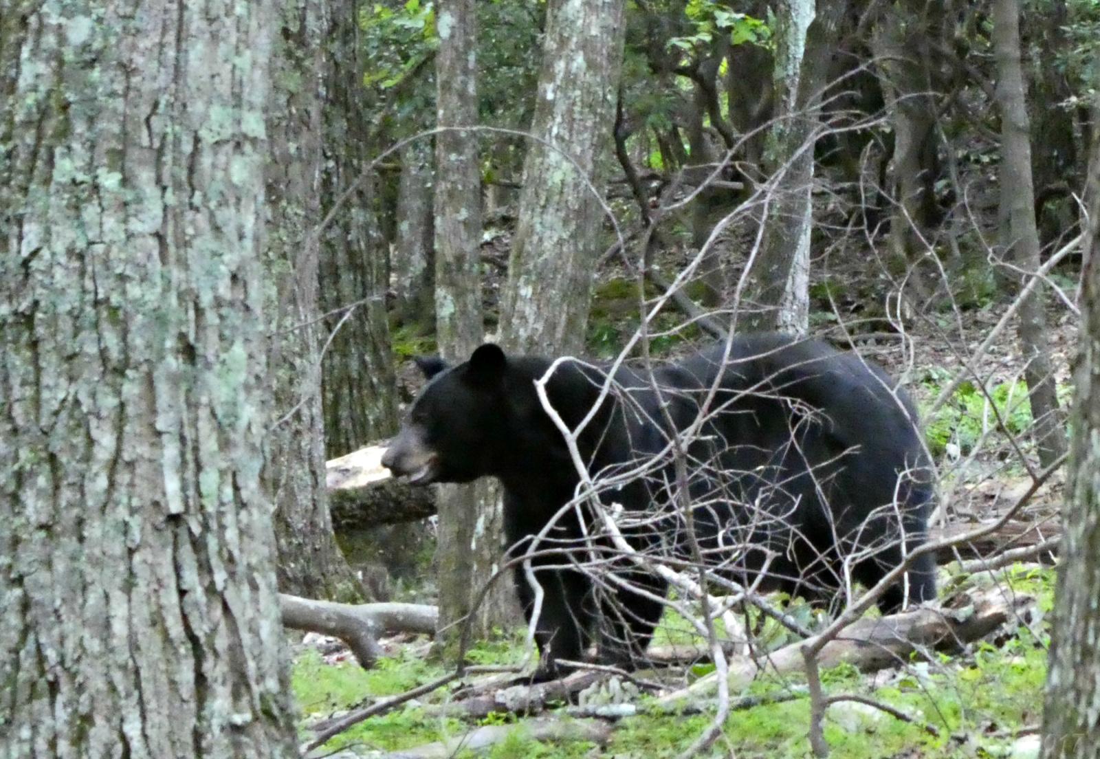 2017 0915 bear