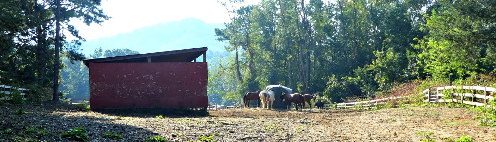 Horses enjoying mealtime just beyond where the new pasture will be