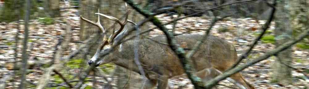 December 17, 2017 - Buck in Bent Tree