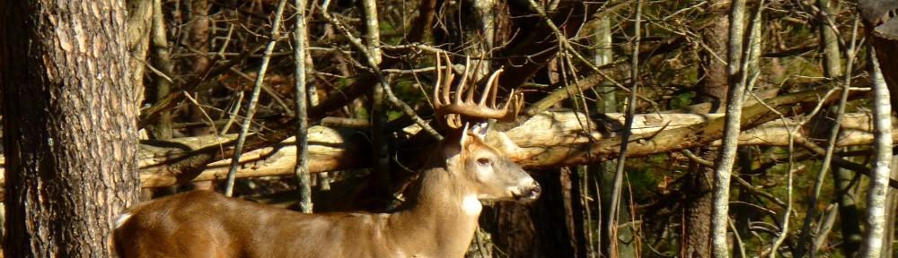 November 25, 2012 - Big buck in Bent Tree