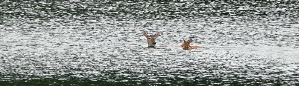 cropped-P1230140-2018-0628-doe-and-fawn-lake-for-header.jpg