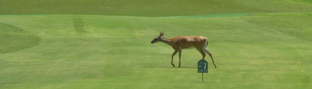 cropped-2018-0727-deer-hole11-header-x.jpg