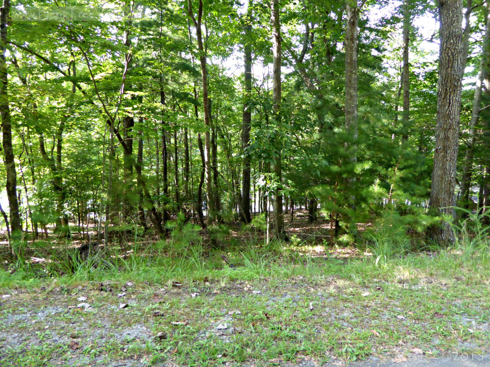 "Lake lot in Bent Tree, sale status ""Contingent"""