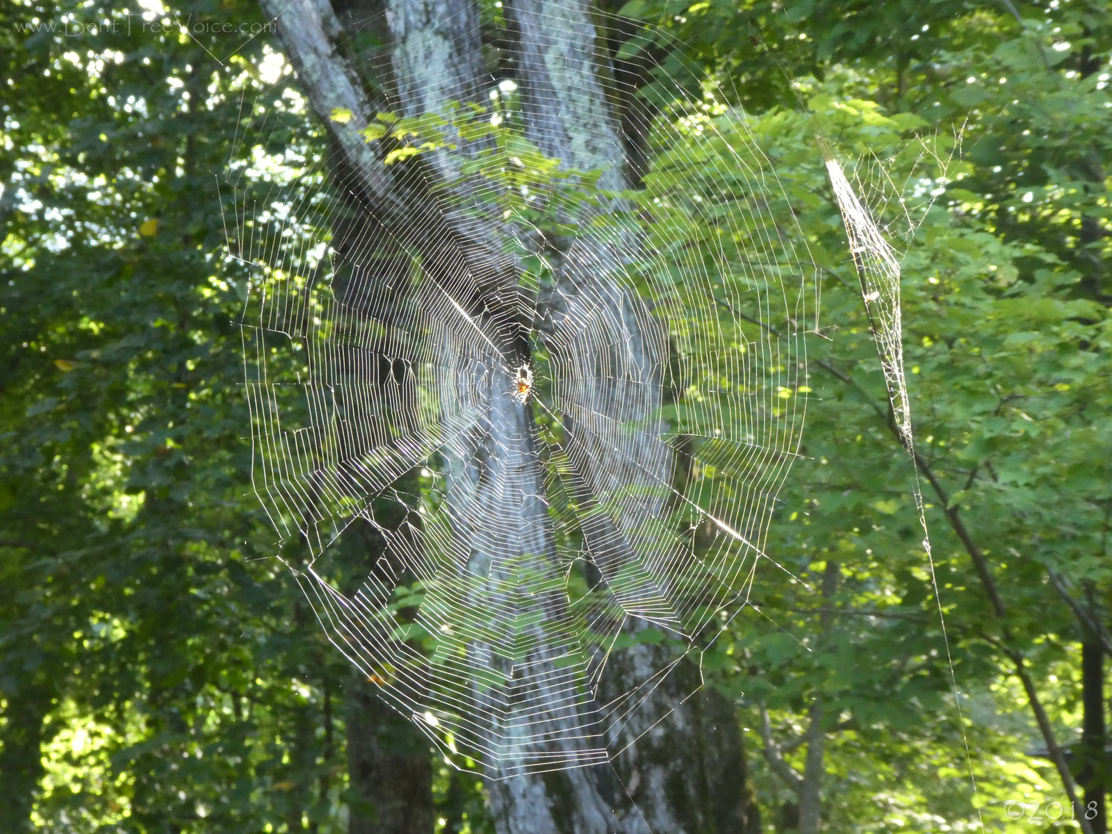 September 9, 2018 - Big spider web in Bent Tree