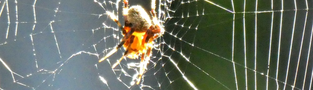 cropped-P1270026-2018-0909-spider-macro-header.jpg