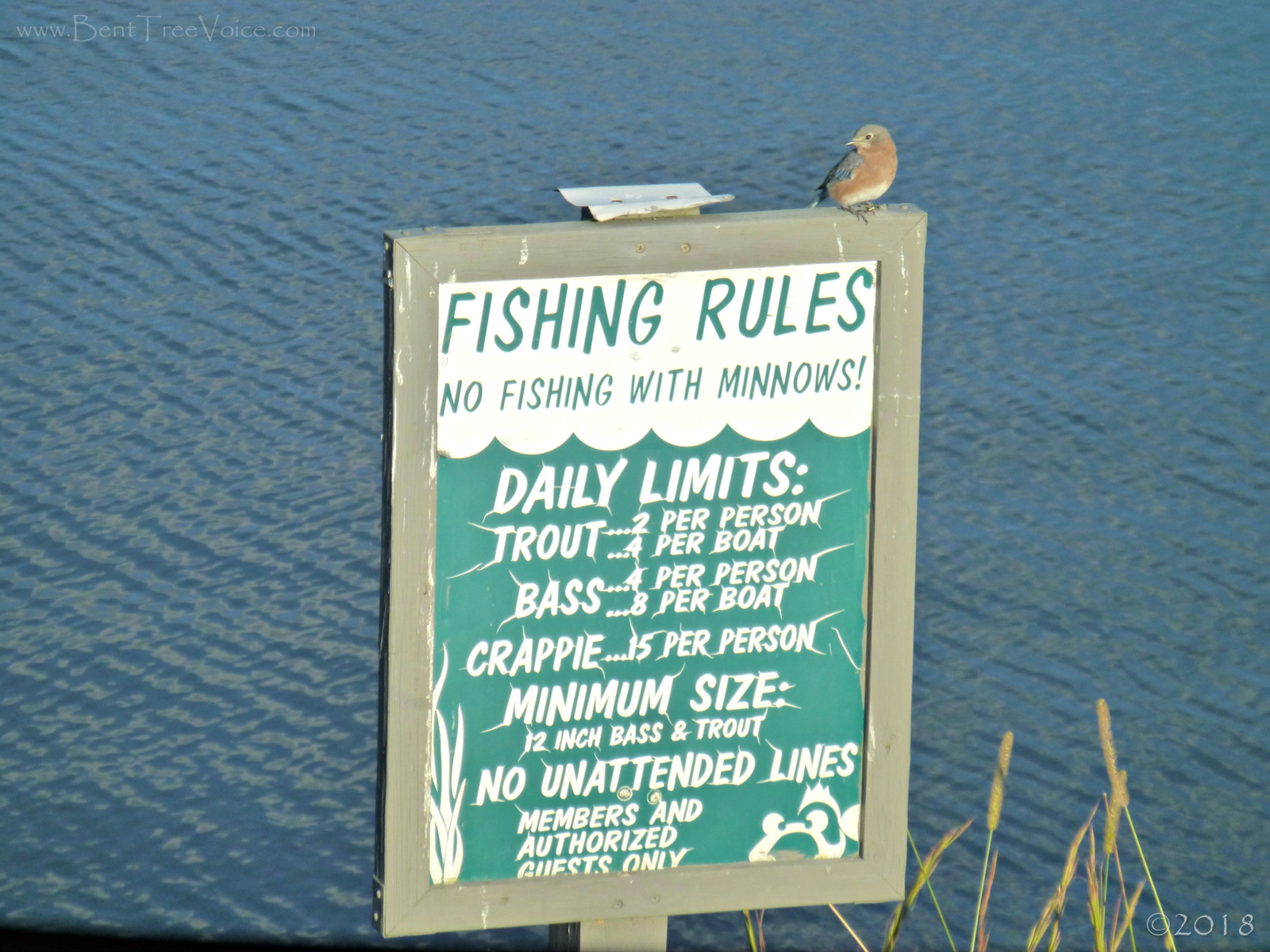 October 11, 2018 - Bluebird on Fishing Rules sign in Bent Tree