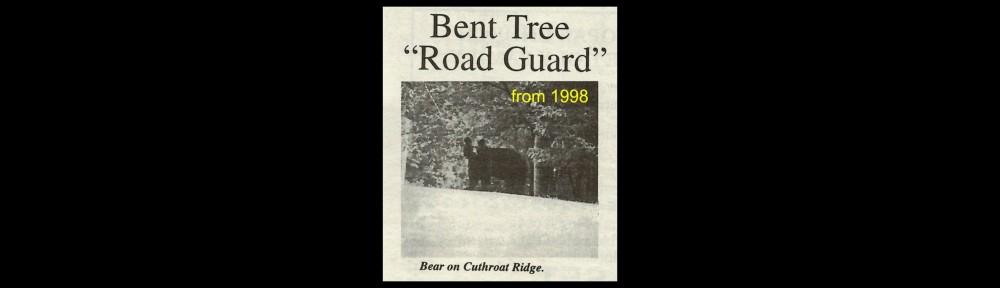 cropped-1998-bt-bear-header.jpg