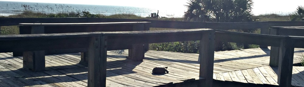 cropped-beach-turtle-header.jpg