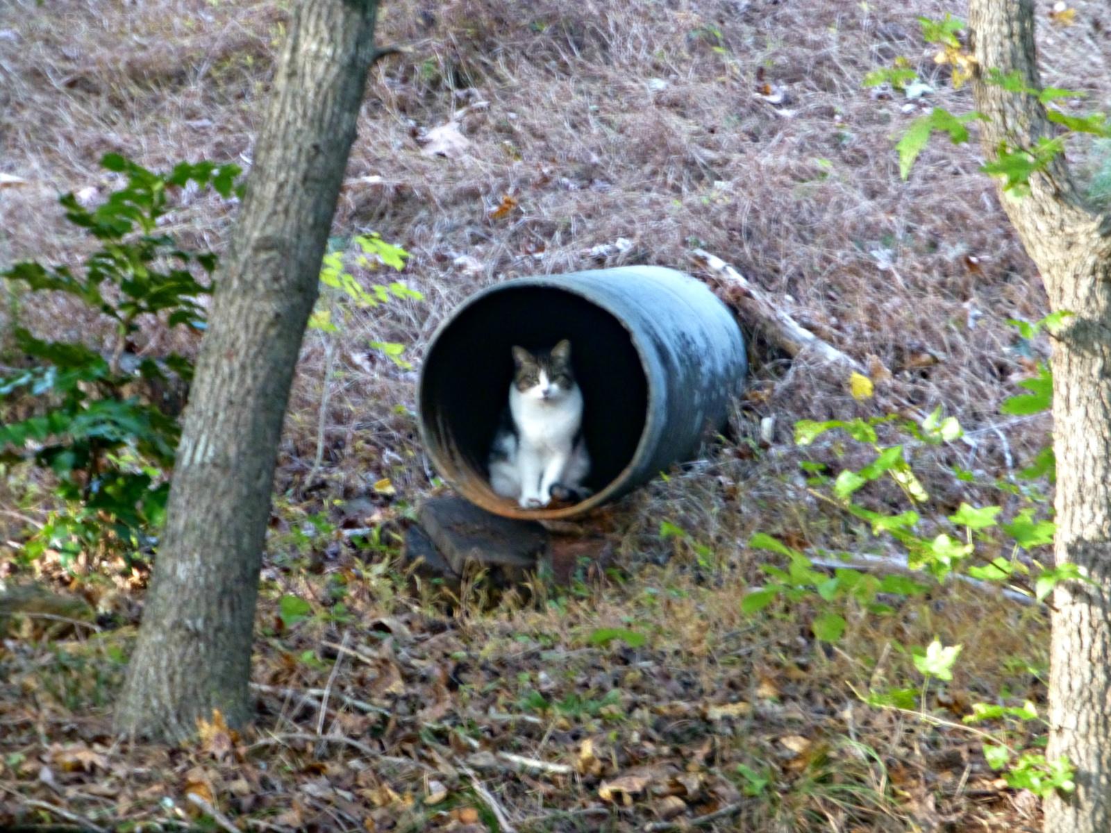 October 30, 2018 - Cat in a culvert in Bent Tree