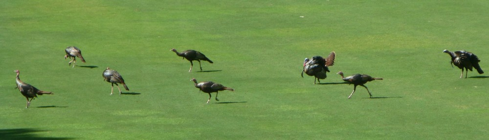 cropped-2019-0505-turkeys-hole09-header.jpg