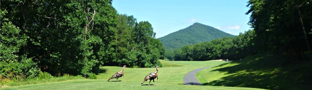 June 21, 2019 - a couple of wild turkeys on Hole 8