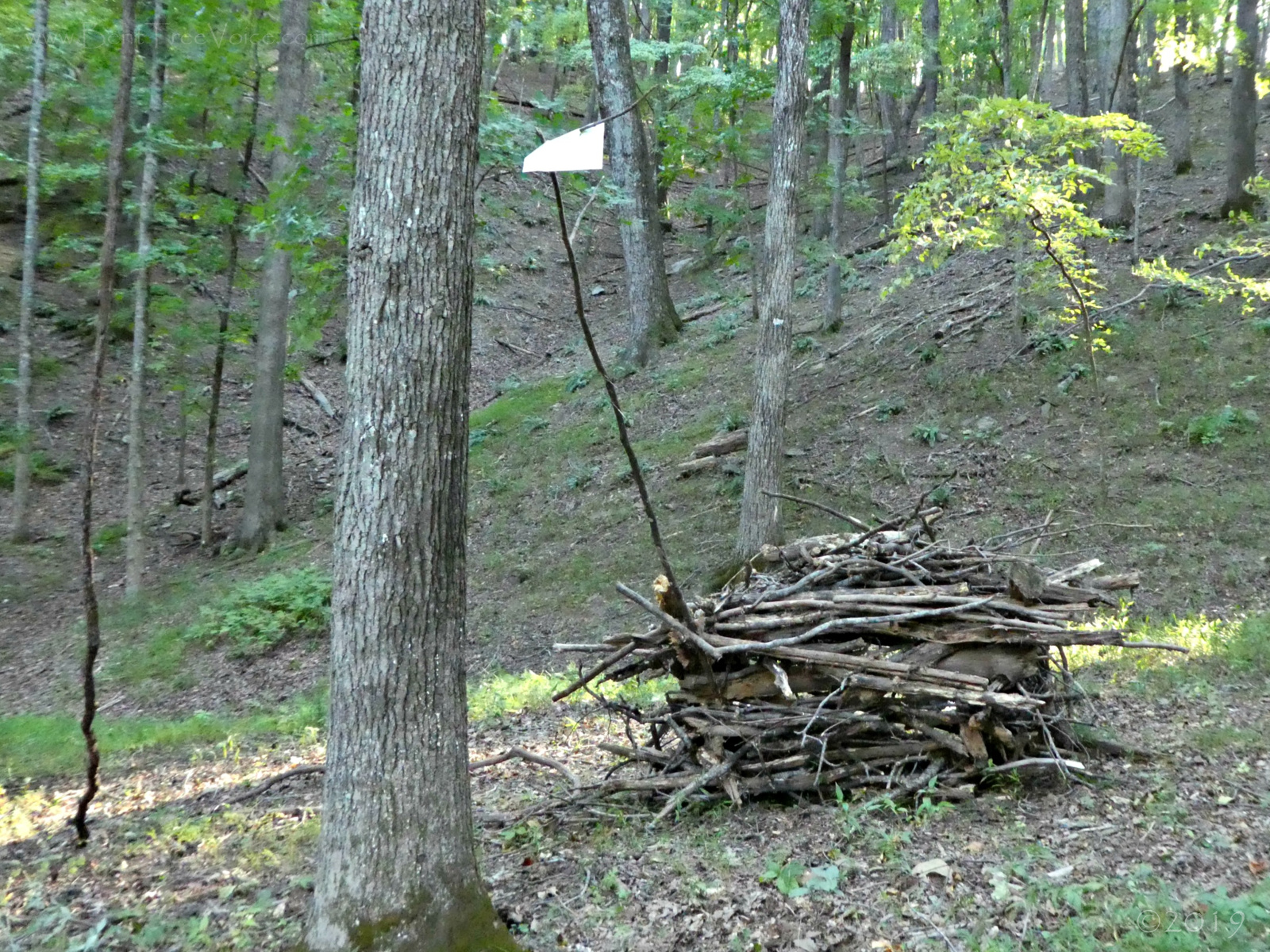 September 6, 2019 - Fort in Bent Tree, complete with a flag