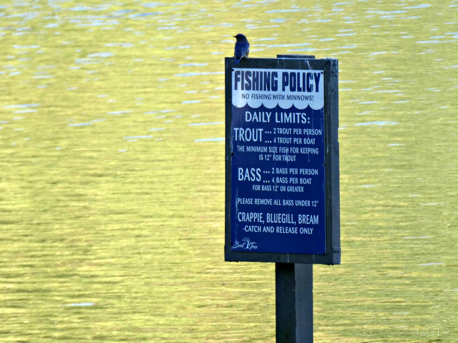October 20, 2019 - Bluebird at Lake Tamarack