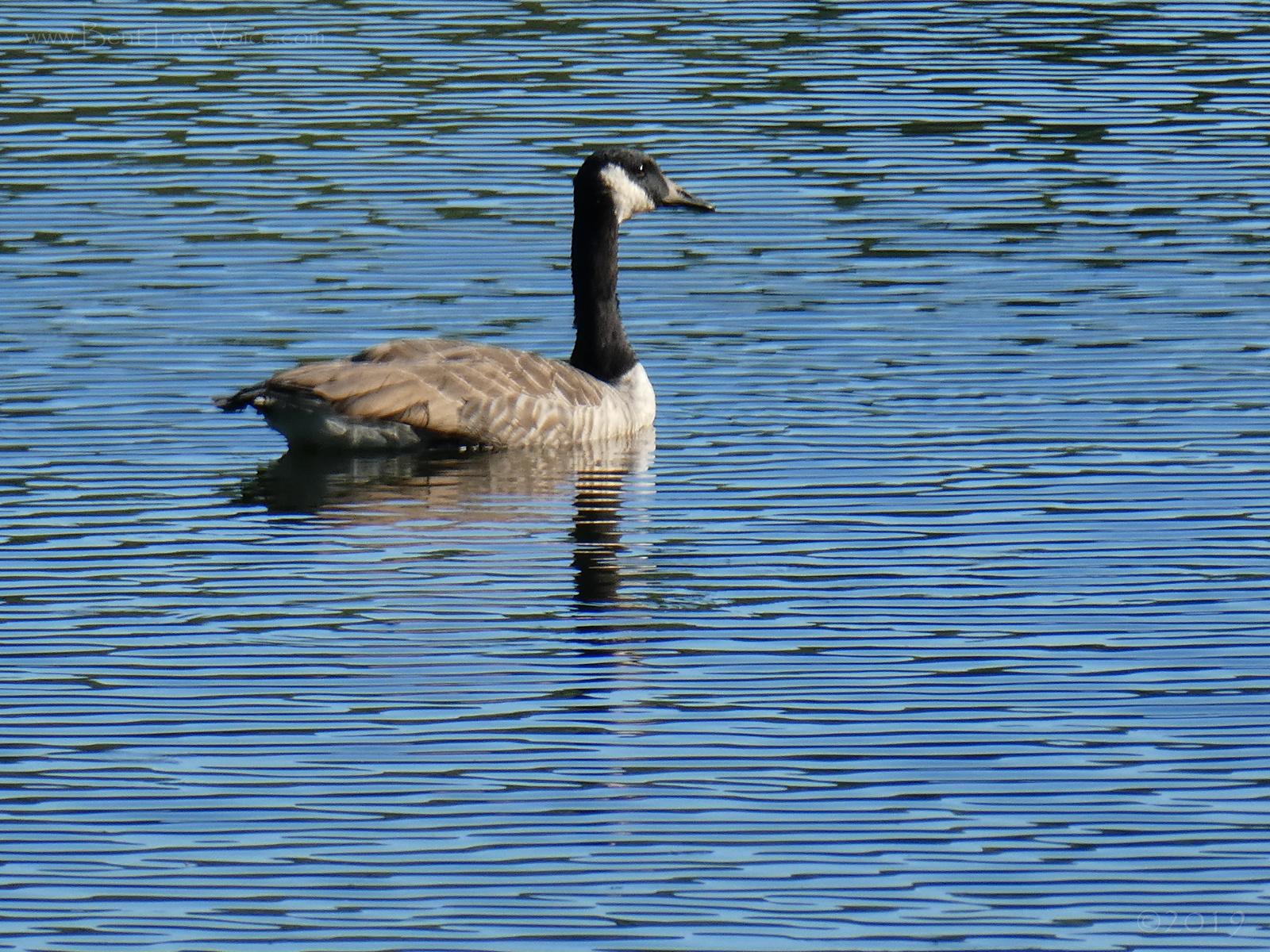 September 6, 2019 - Lake Tamarack in Bent Tree