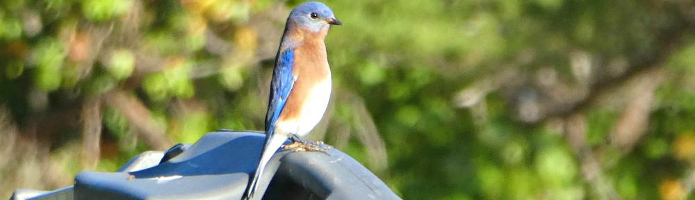 October 20, 2019 - Bluebird sitting on a boat stored in the racks