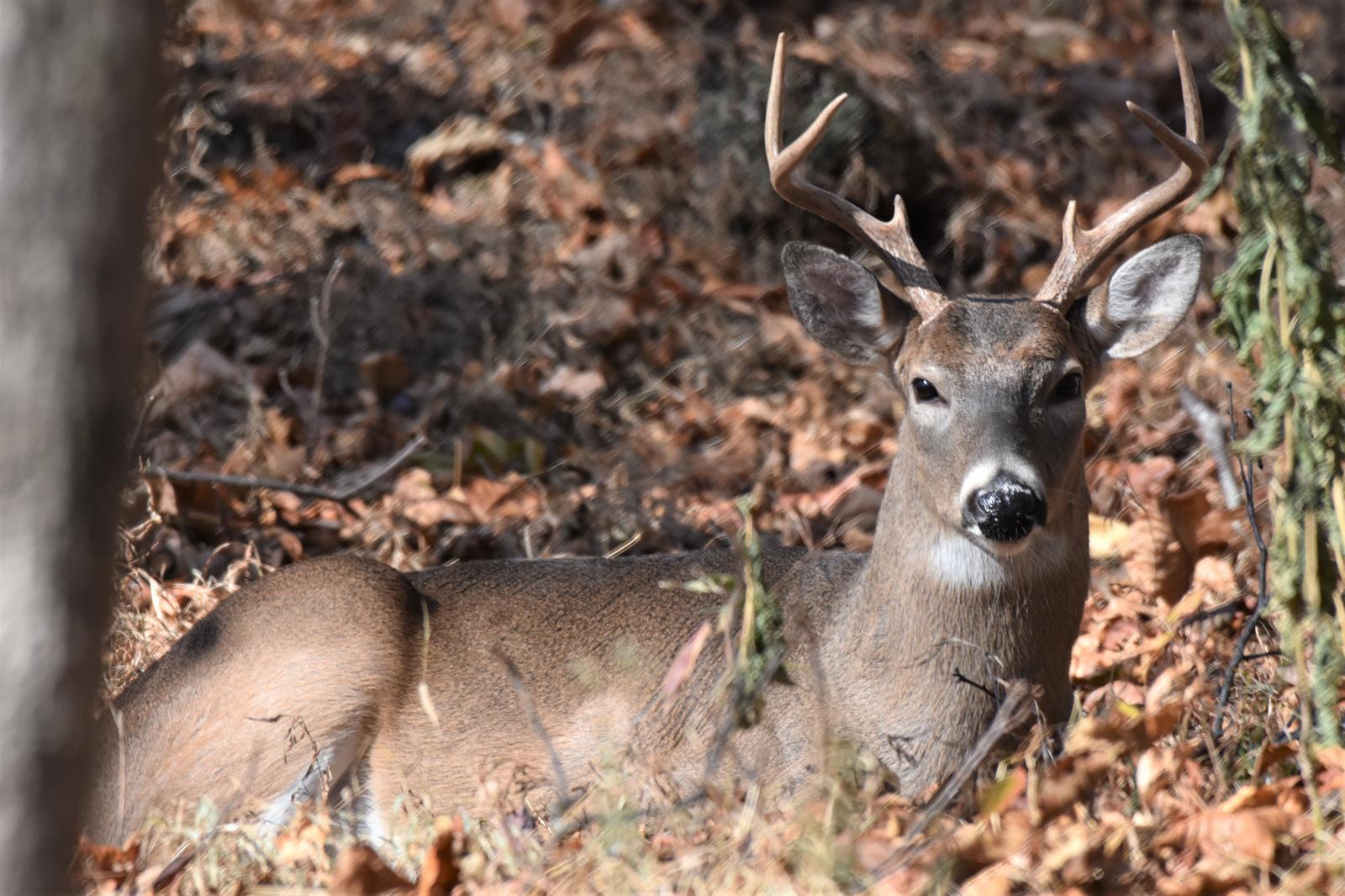 November 17, 2019 - Buck in Bent Tree