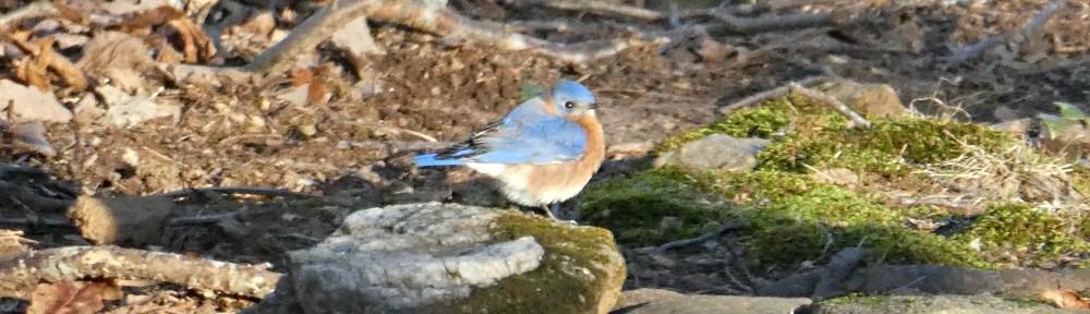 cropped-2020-0121-puffy-bluebird-header.jpg