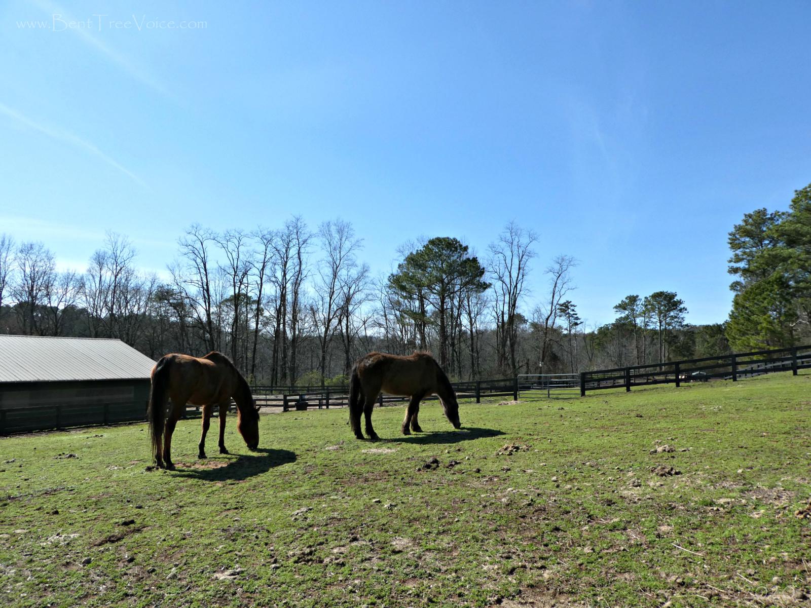 February 22, 2020 - Horses at Bent Tree