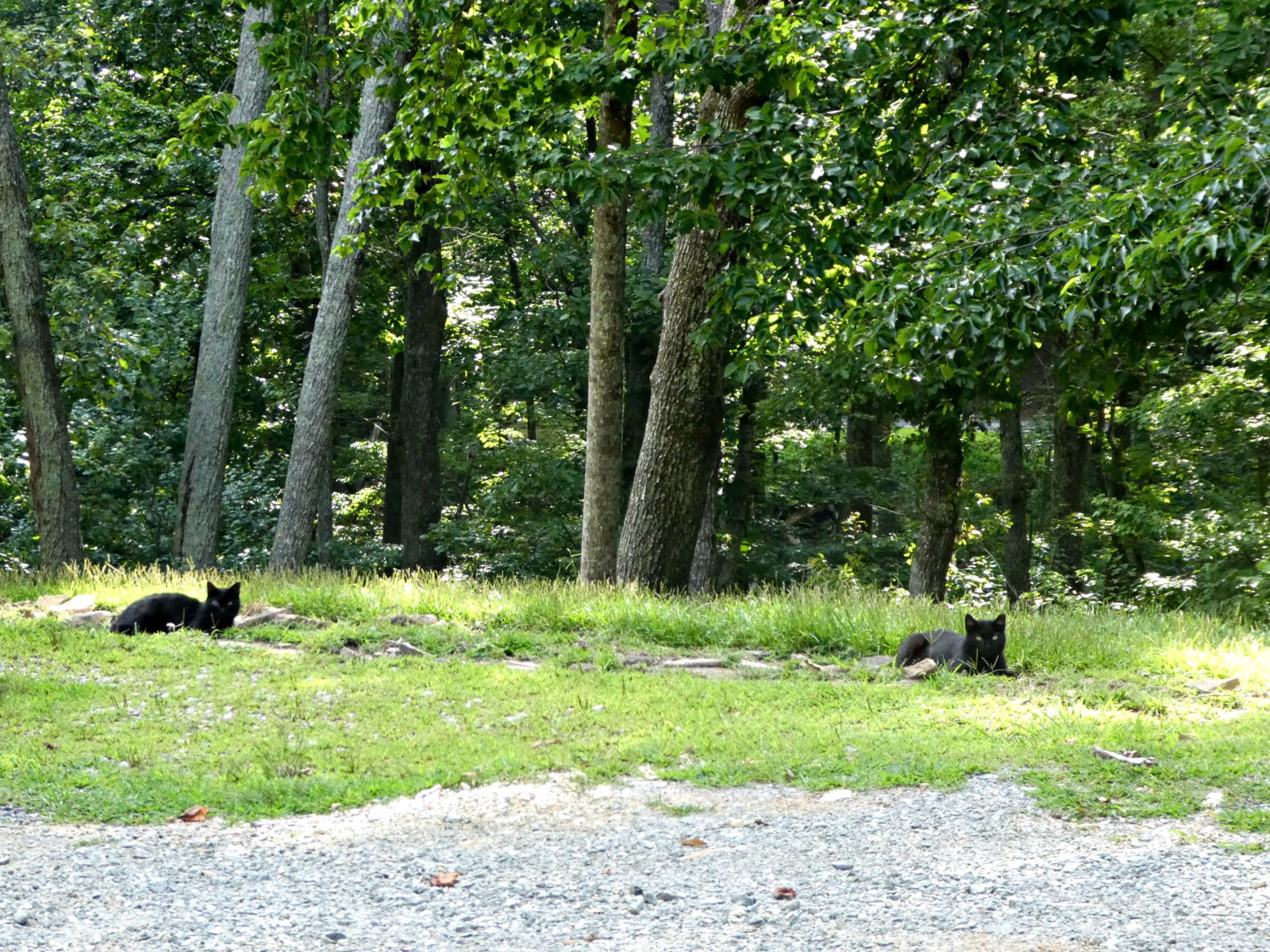 August 11, 2020 - Cottage Cats