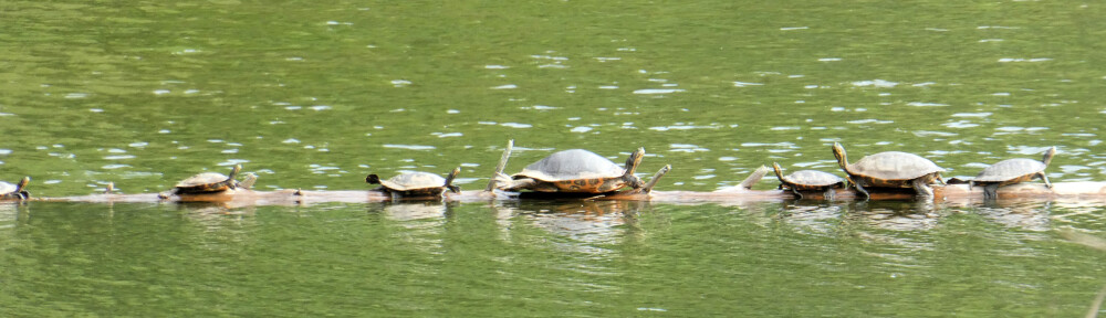 cropped-2020-0922-turtle-log-header.jpg
