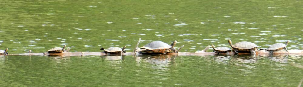 cropped-2020-0922-turtle-log-header.jpg