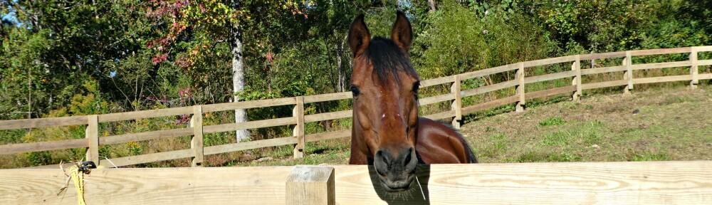 cropped-2020-1018-hay-horse-header2.jpg