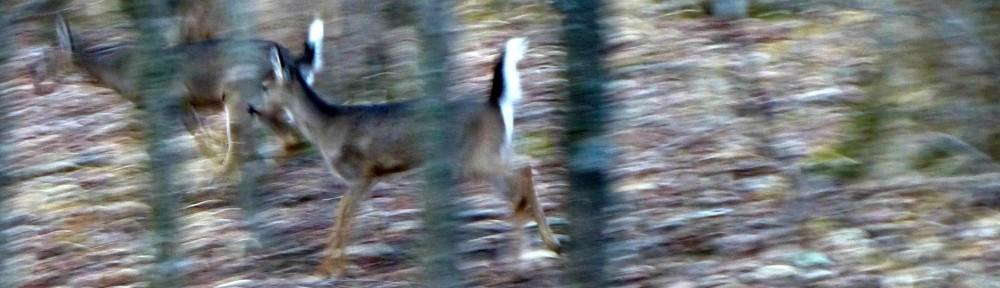 cropped-2013-0107-deer-running