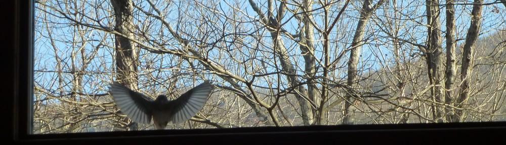 cropped-2013-03-bluebird-window
